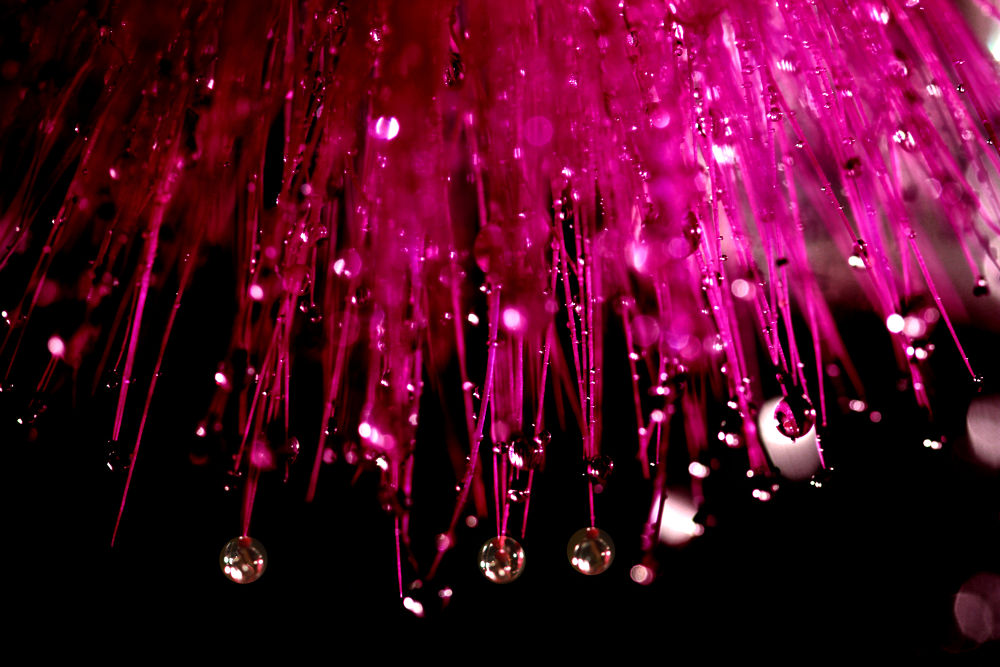 Dreamy Drops - 4 by Dinesh Verma