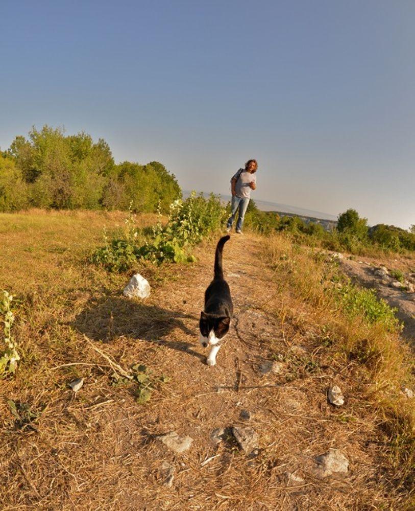 67 Эта кошка сопровождала нас весь путь - подозревала что у нас есть пища by wird