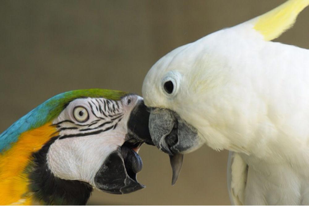 angry birds by Ori Livney