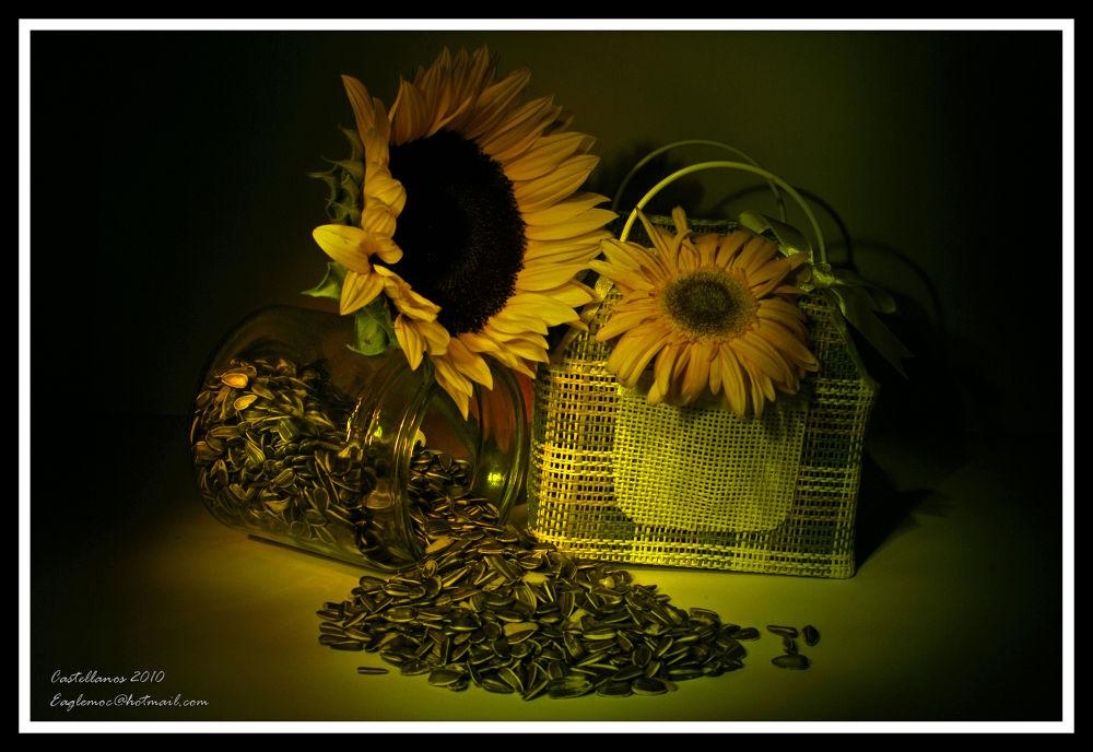 Sunflowers 1 by George Castellanos