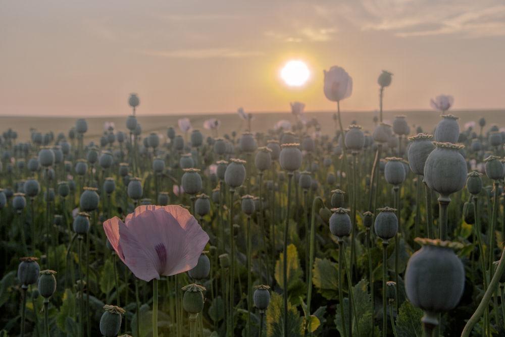 Opium...  by gaellebob