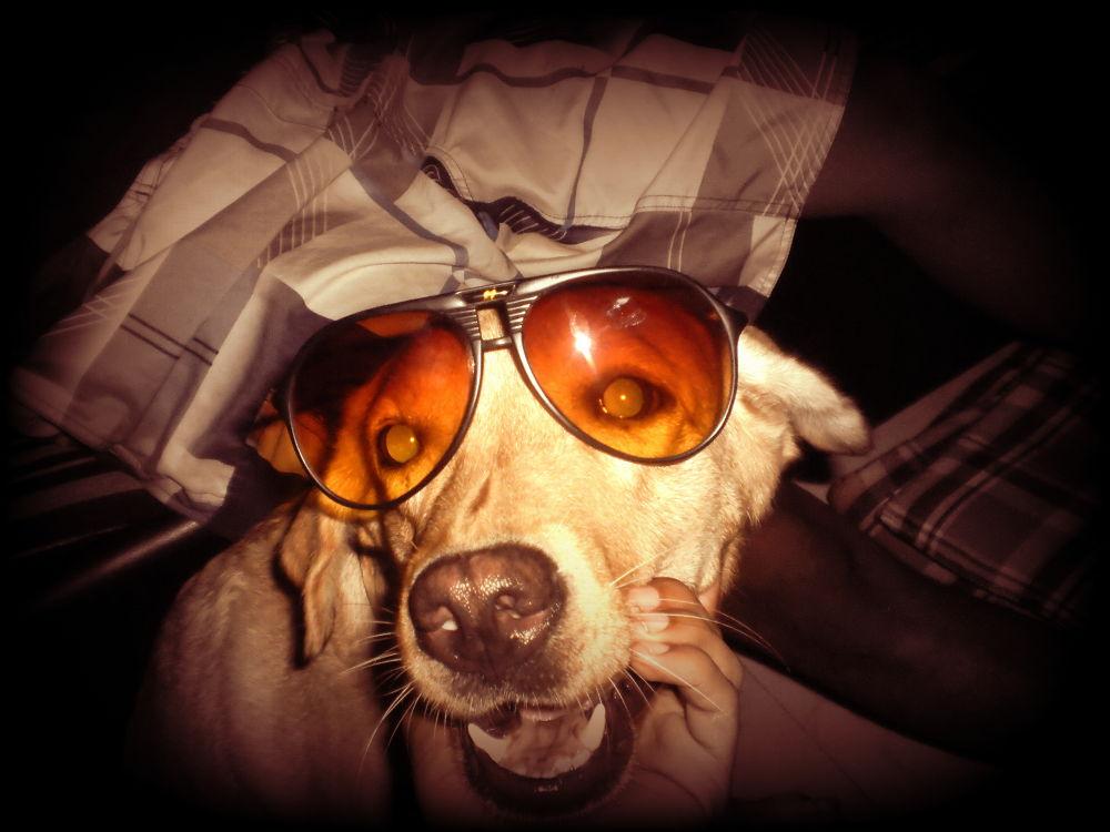 doggi style by Mchaurasaia