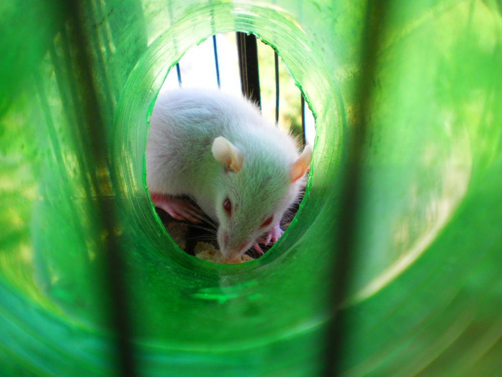 sleepy mice by Mchaurasaia