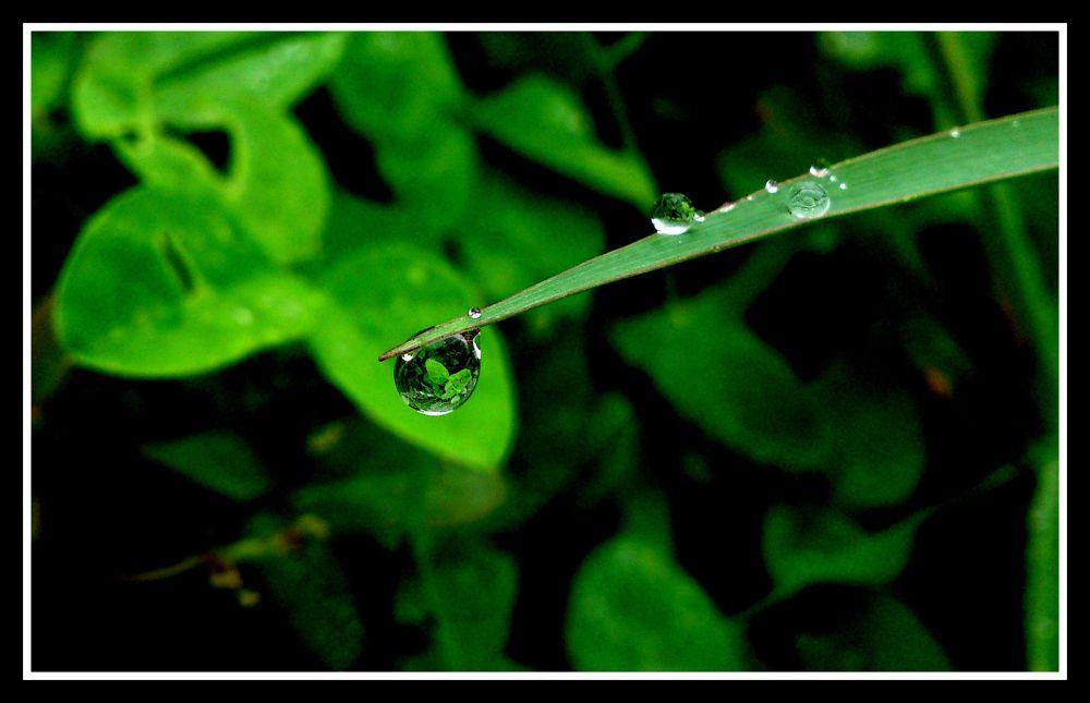 DSC_0620 by Nagendra Bhat