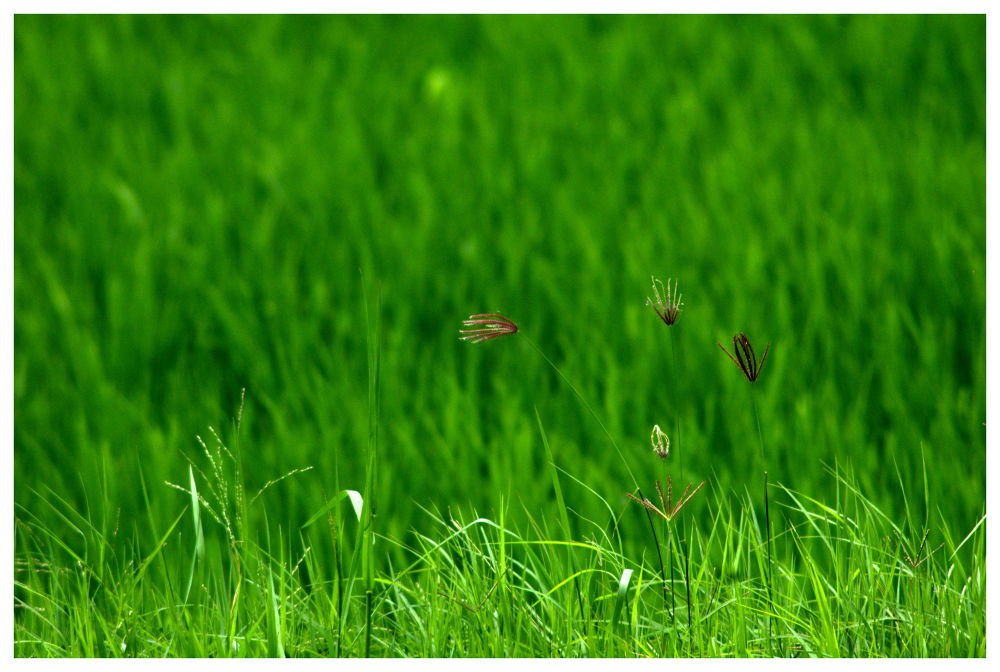 Green by Nagendra Bhat