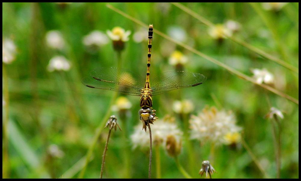DSC_0505 by Nagendra Bhat