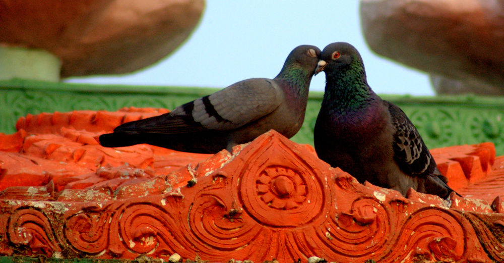Love by Nagendra Bhat