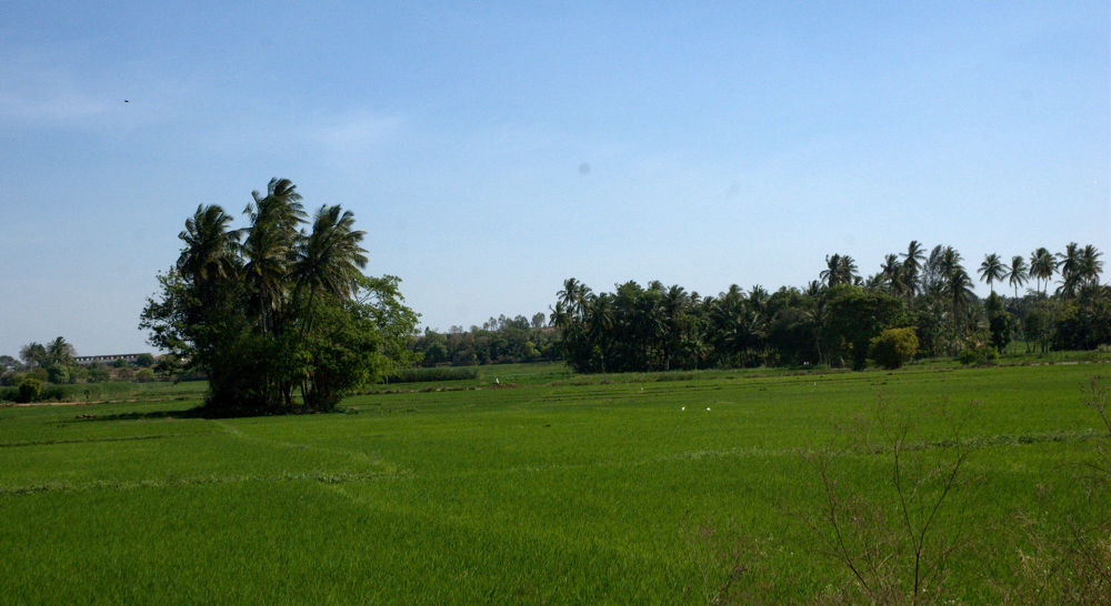 Green Nature by Nagendra Bhat