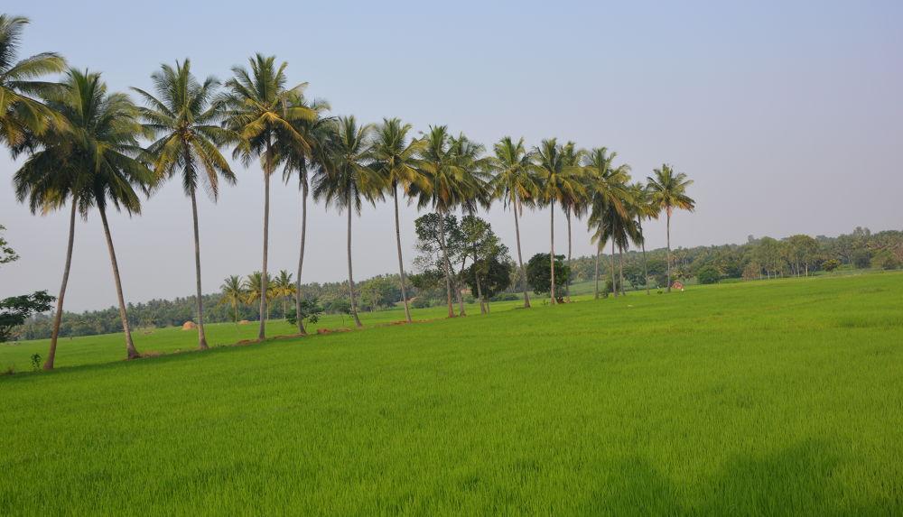 DSC_0569 by Nagendra Bhat