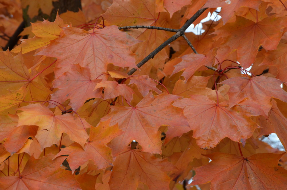 Autumn by jackiwright16