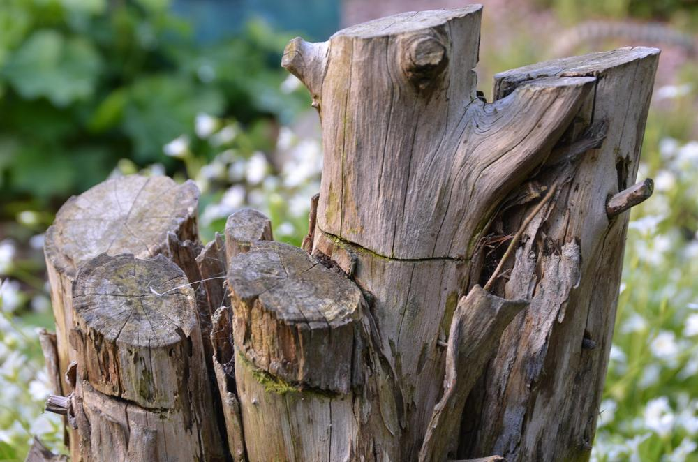 Rustic posts by jackiwright16