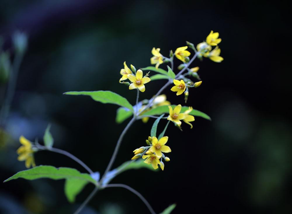 yellow by Zinovi Seniak