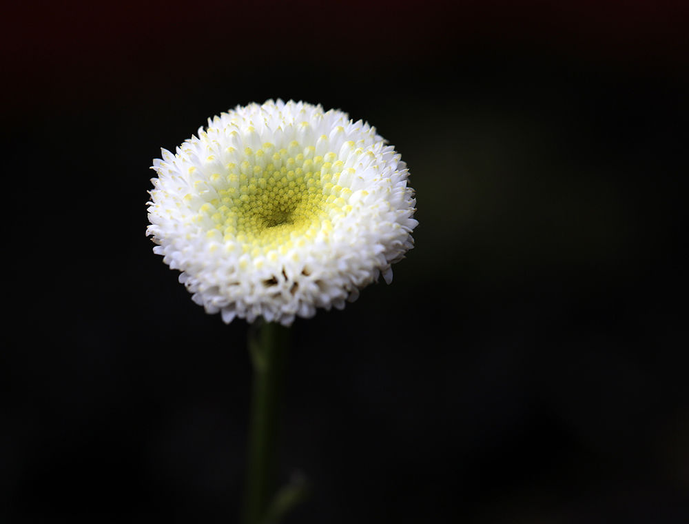 Photo in Nature #flowers #white