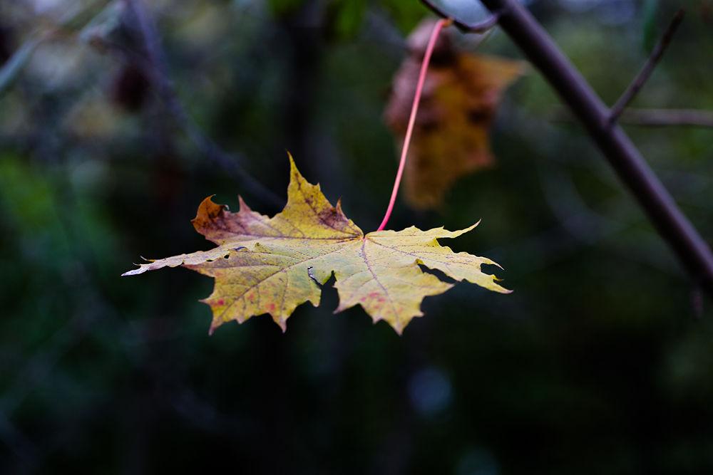 the last leaf by Zinovi Seniak