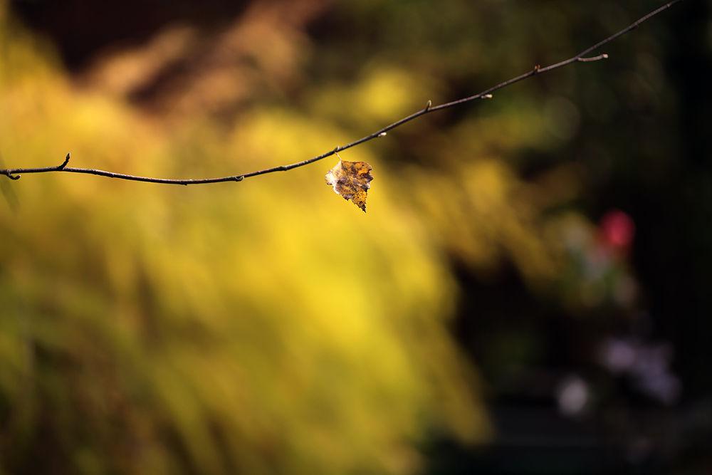 Photo in Nature #leaf #fall