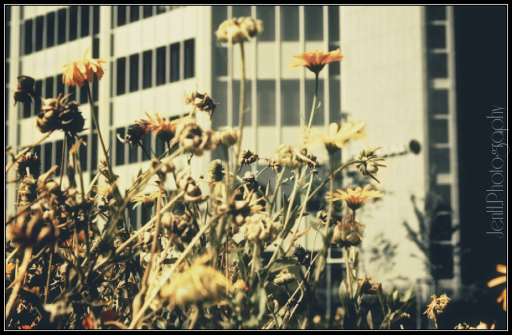 Flowers by jenhphotography