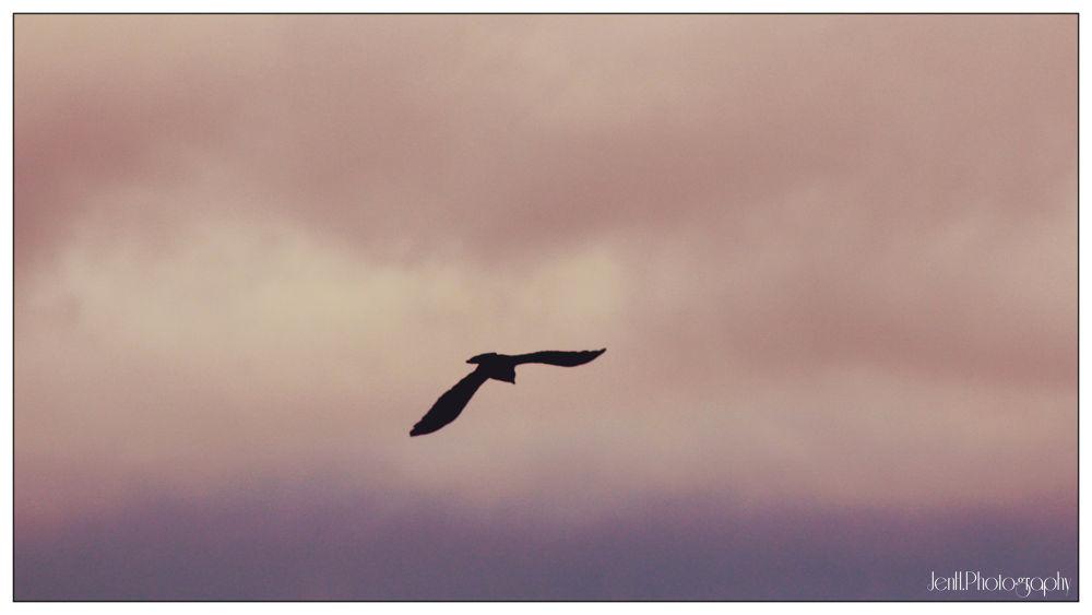 Fly by jenhphotography
