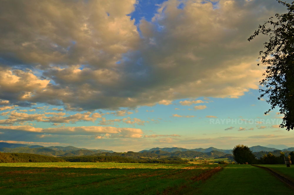 DRASENBERG by cristeanray