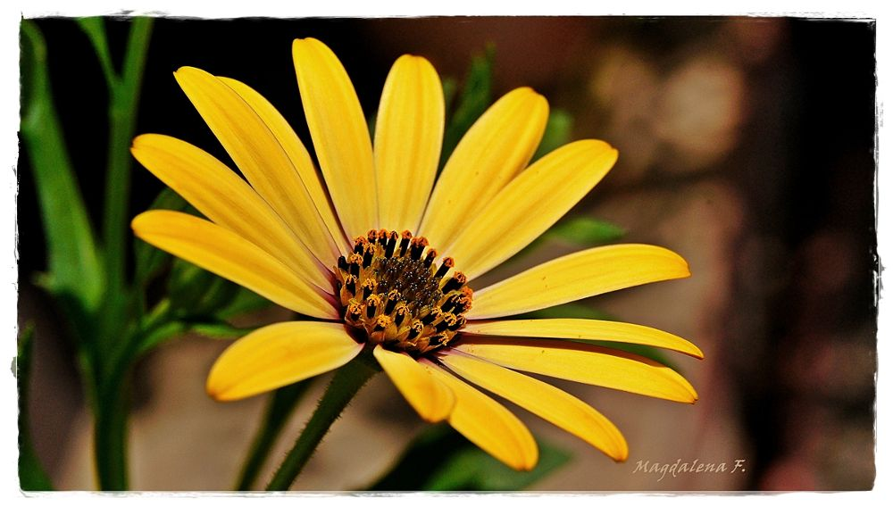 ...flower... by magdalenafeichter1