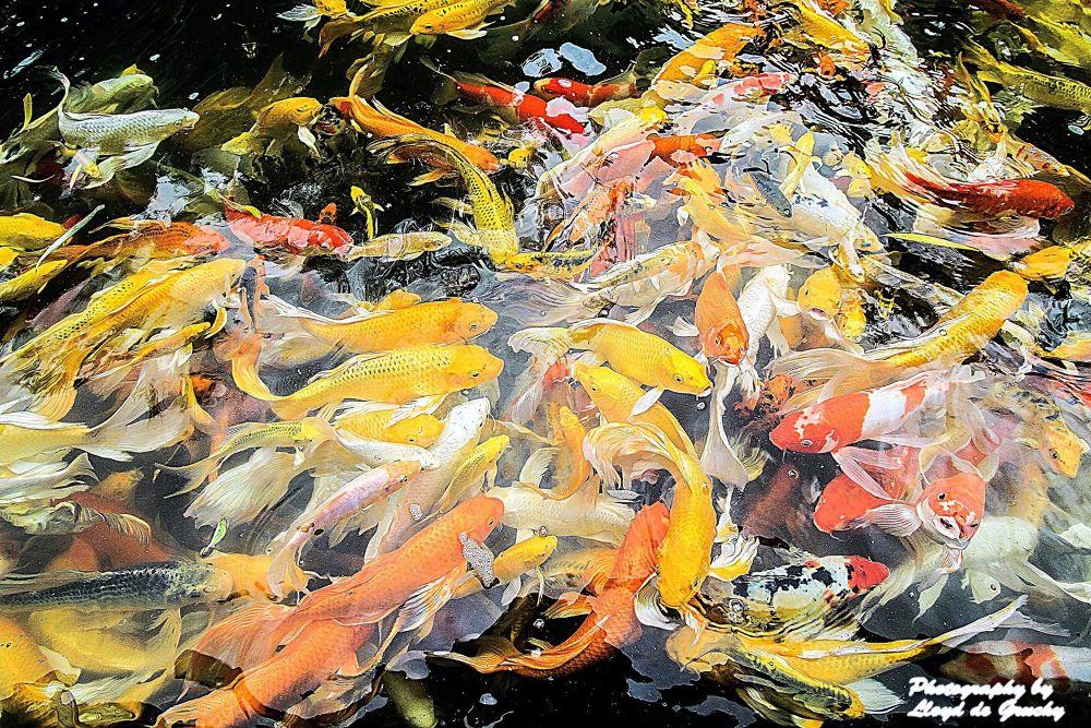 Lets feed the fish by Lloyd de Gruchy