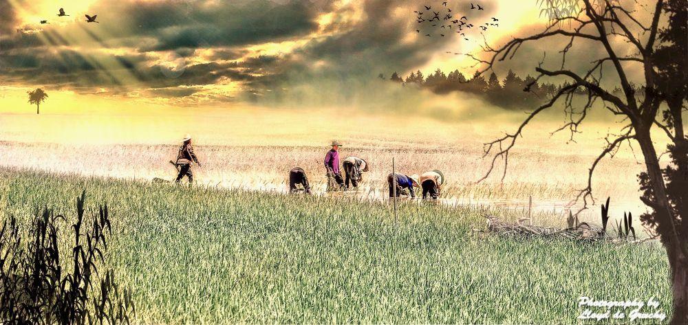 Sun Rise Udon by Lloyd de Gruchy