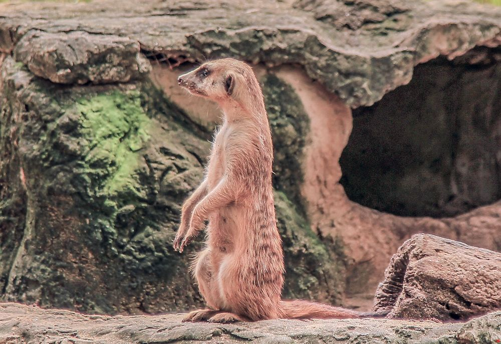 Whats that over there by Lloyd de Gruchy