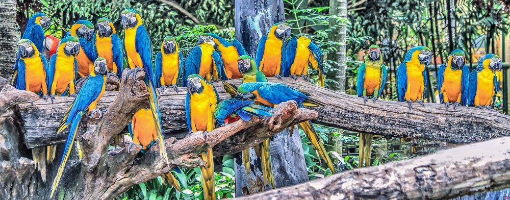 The Bird Gang by Lloyd de Gruchy
