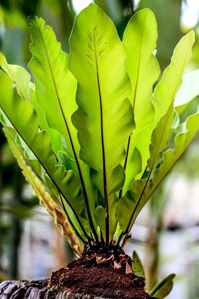 Beautiful Green by Lloyd de Gruchy