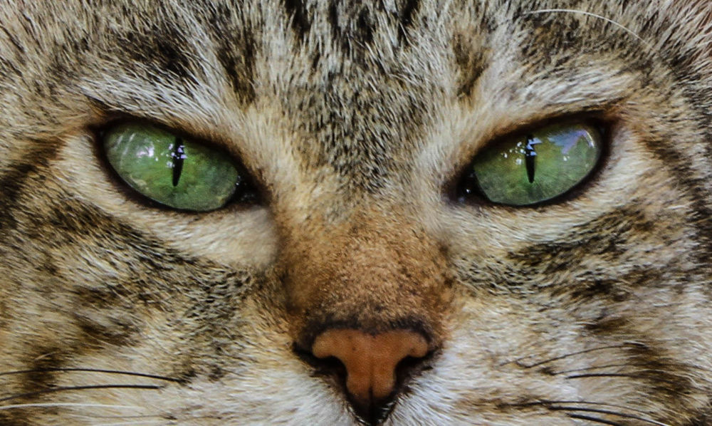Cats eyes by Lloyd de Gruchy