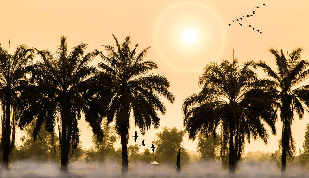 sun and Birds by Lloyd de Gruchy