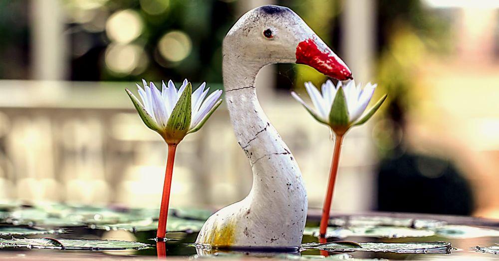 The Little Lilly Pond by Lloyd de Gruchy