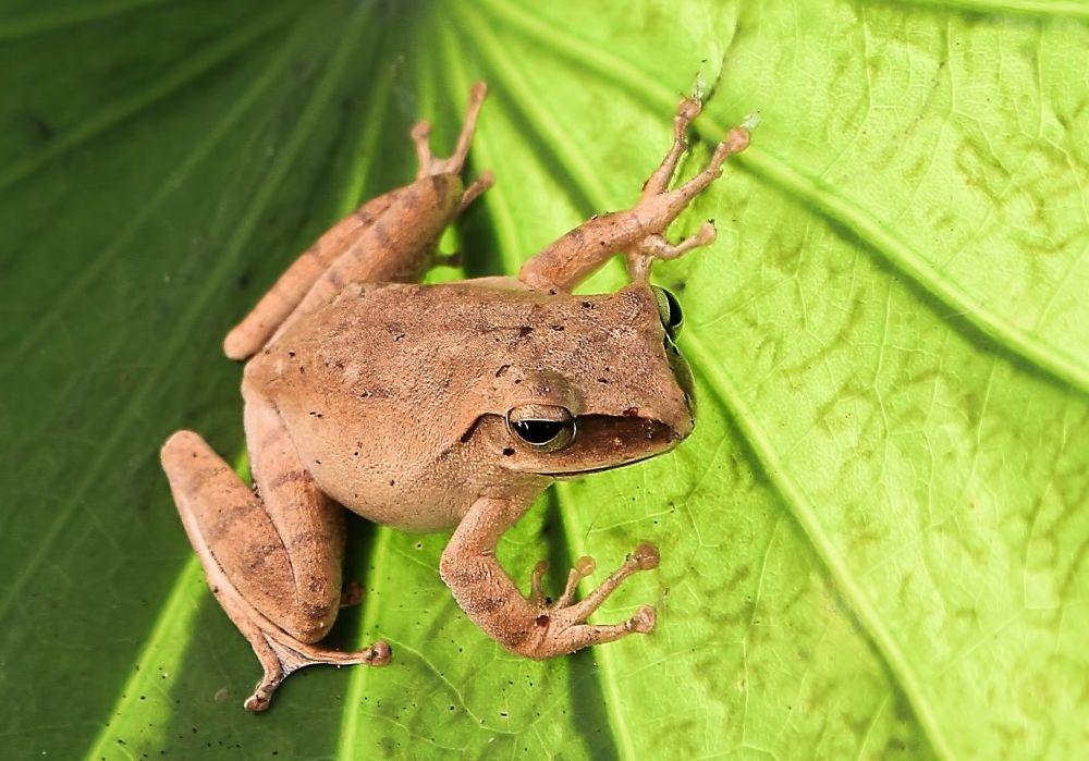 My friend the garden Frog by Lloyd de Gruchy