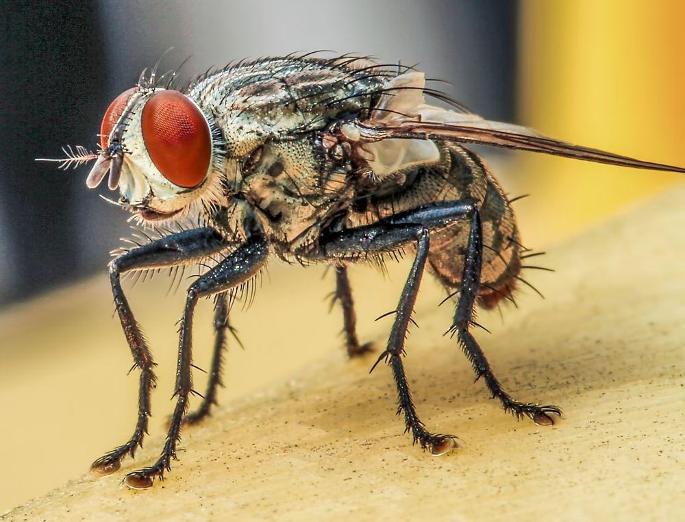 The Fly by Lloyd de Gruchy