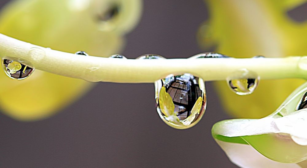 The Water Droplets by Lloyd de Gruchy