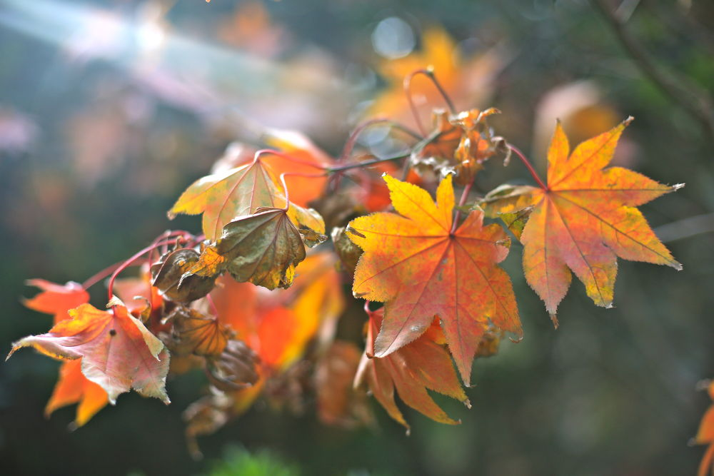 Autumn leaves by FranGubbey