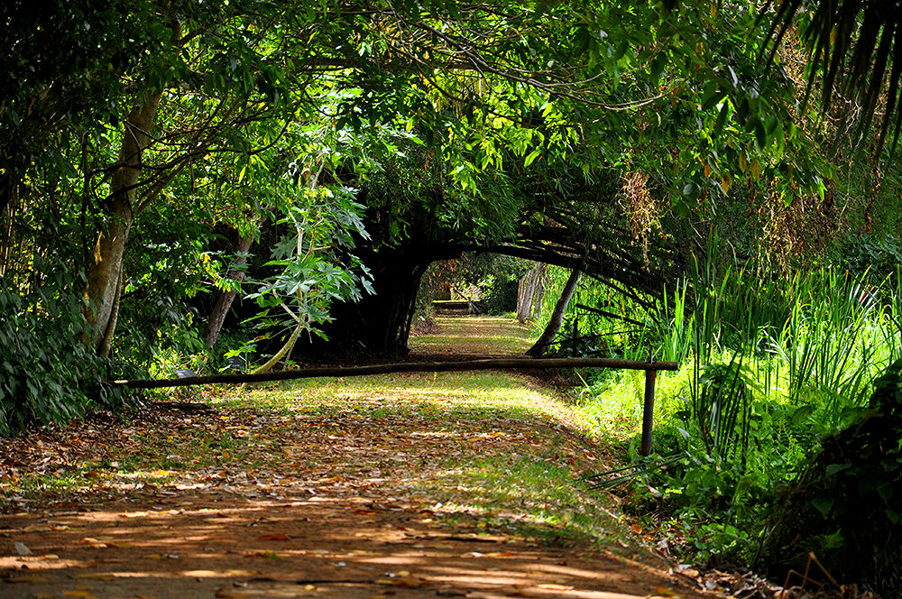Jardim Botânico JP-PB by Calnews