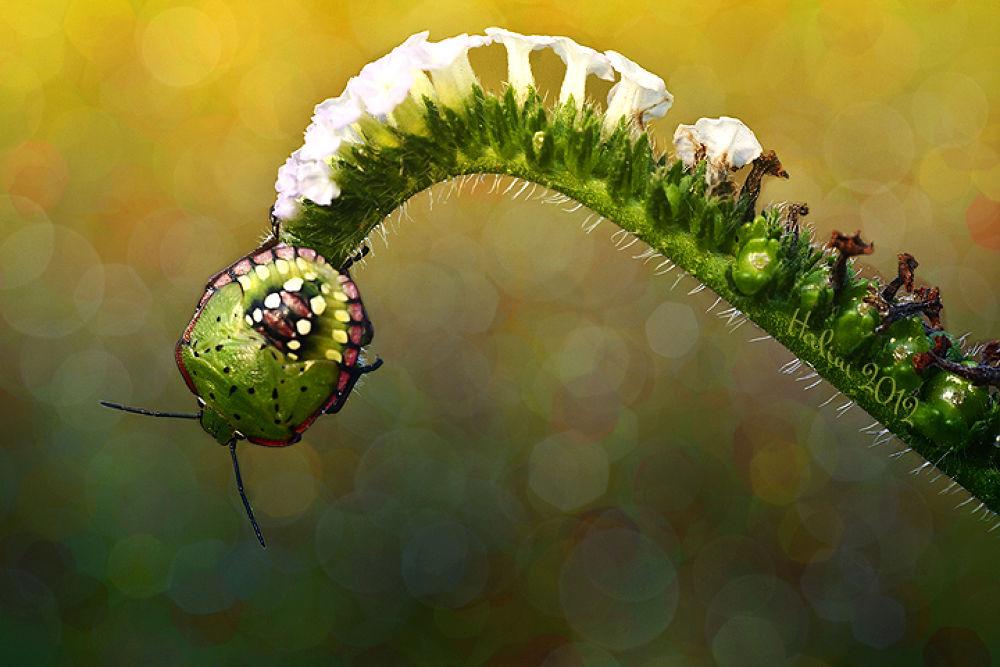 bug 4acc IMSC by halimqomarudin
