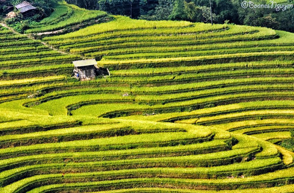terraced fields by Boones Nguyen