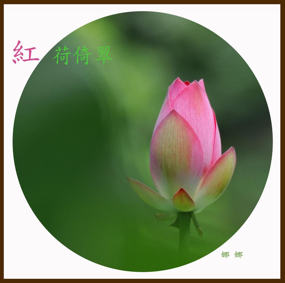 Lotus by katrinapang