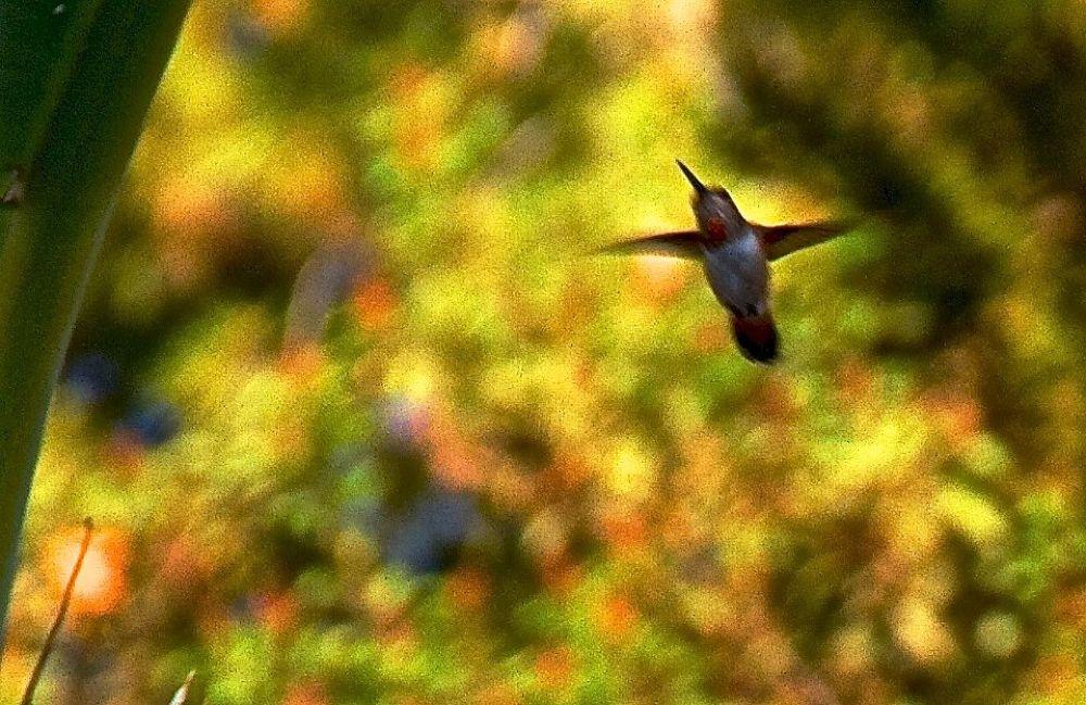 """HUMMINGBIRD"" by mindisparks"