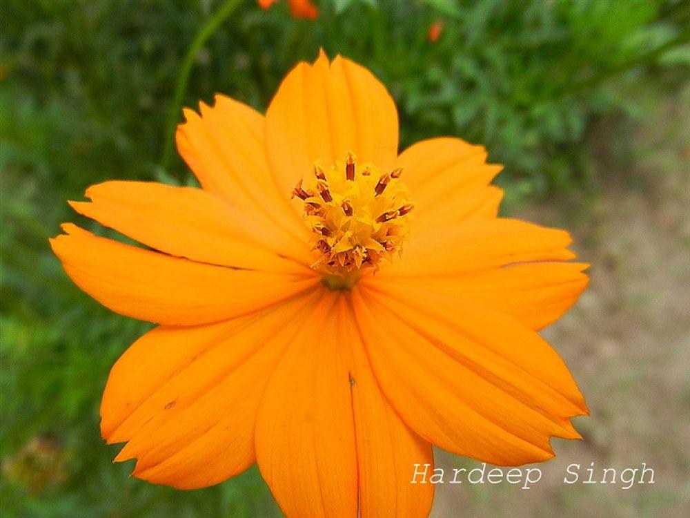 DSCN0875 by hardeepsingh26
