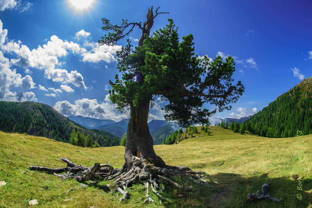 old tree by Boris WERNER