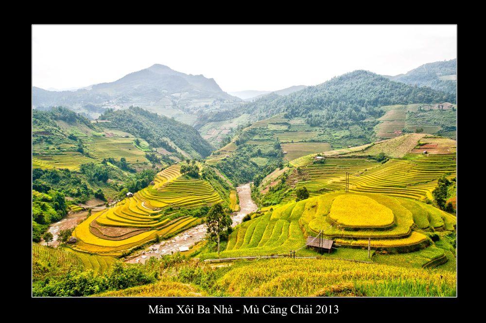 Photo in Landscape #terraced rice fields mu cang c #thang nguyen #yen bai #viet nam #ruong bac thang