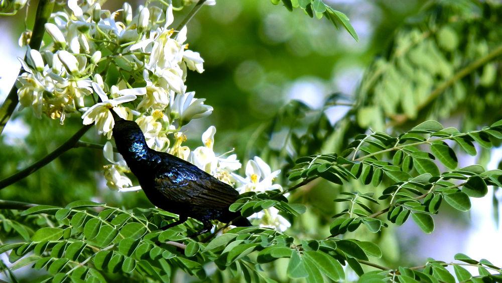 Shiny Bird by Karthik Easvur