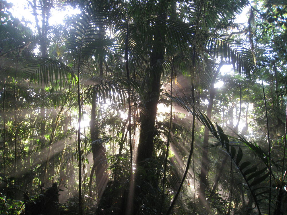 Behind the Rain Forest by #LuvToTravelWorld