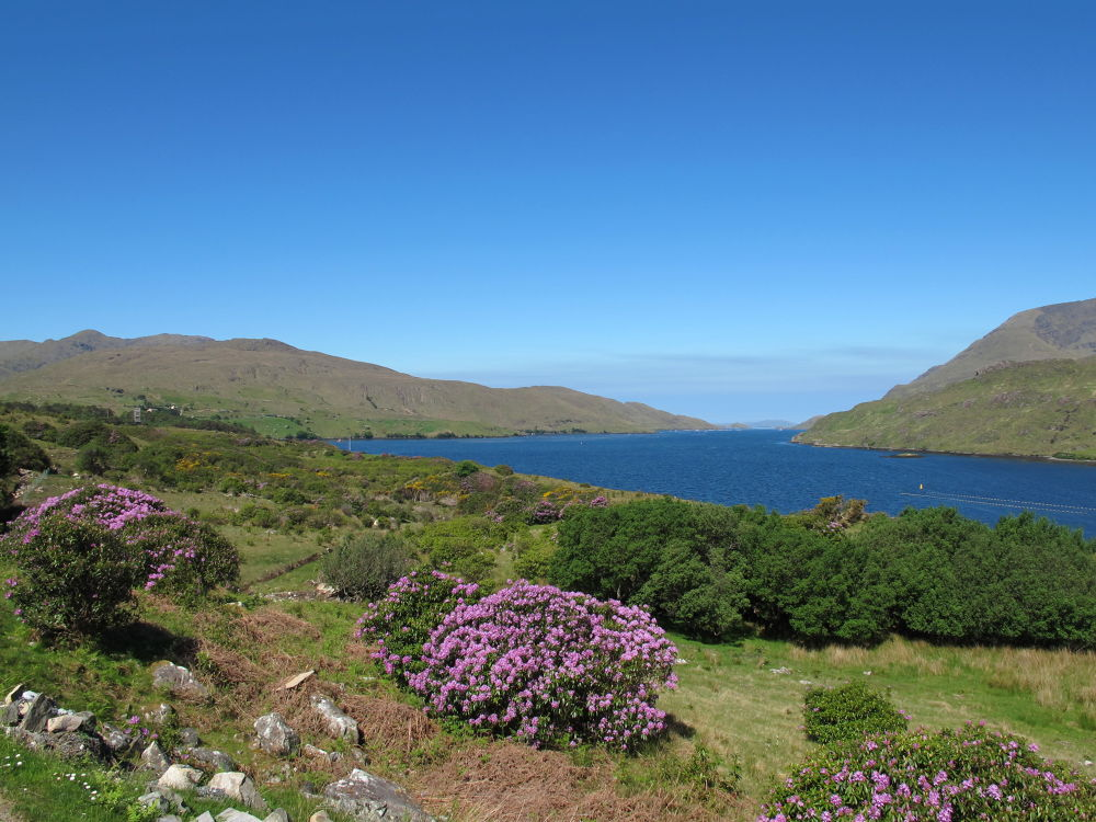 Rhodos in Bloom ~ Ireland (fjord) by #LuvToTravelWorld