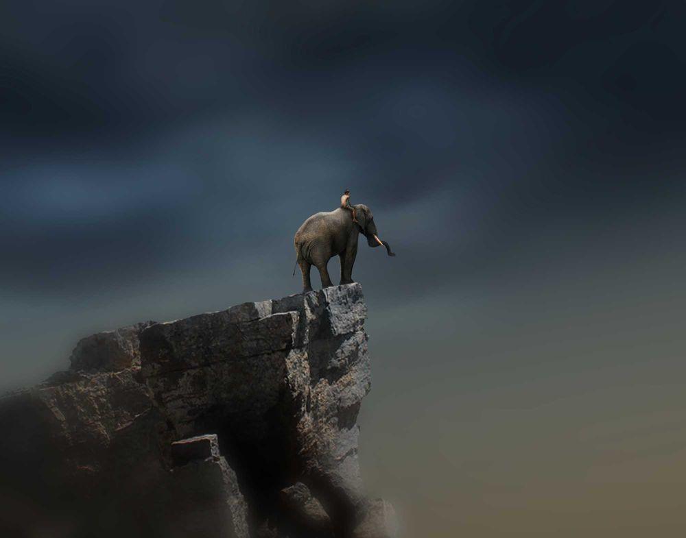 02_gajah by Dheny Patungka
