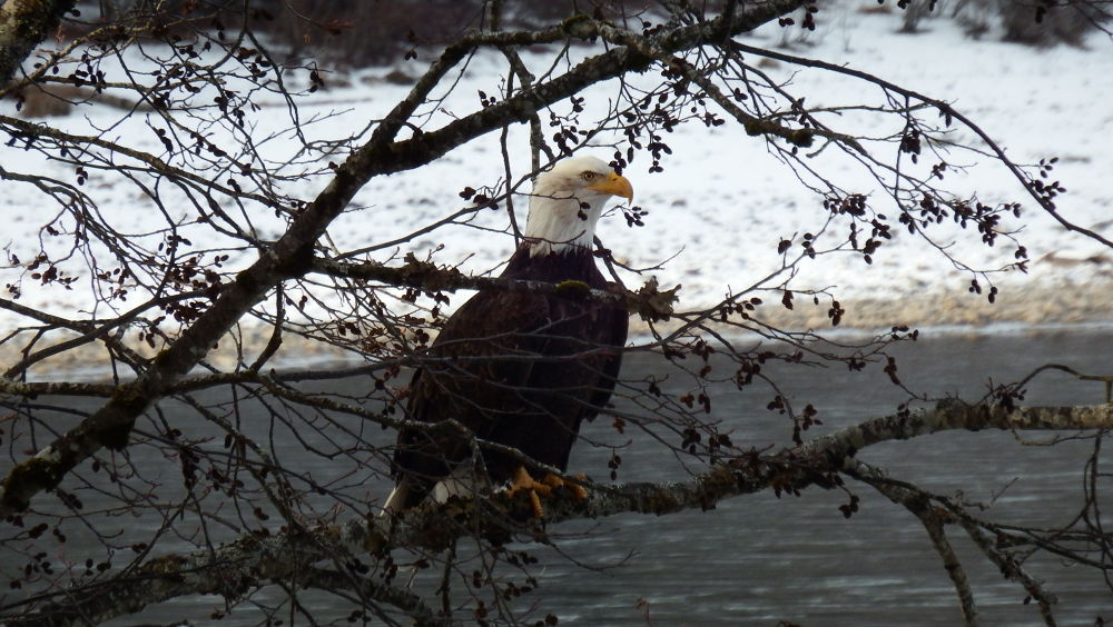 Photo in Animal #eagle #birds #wildlife