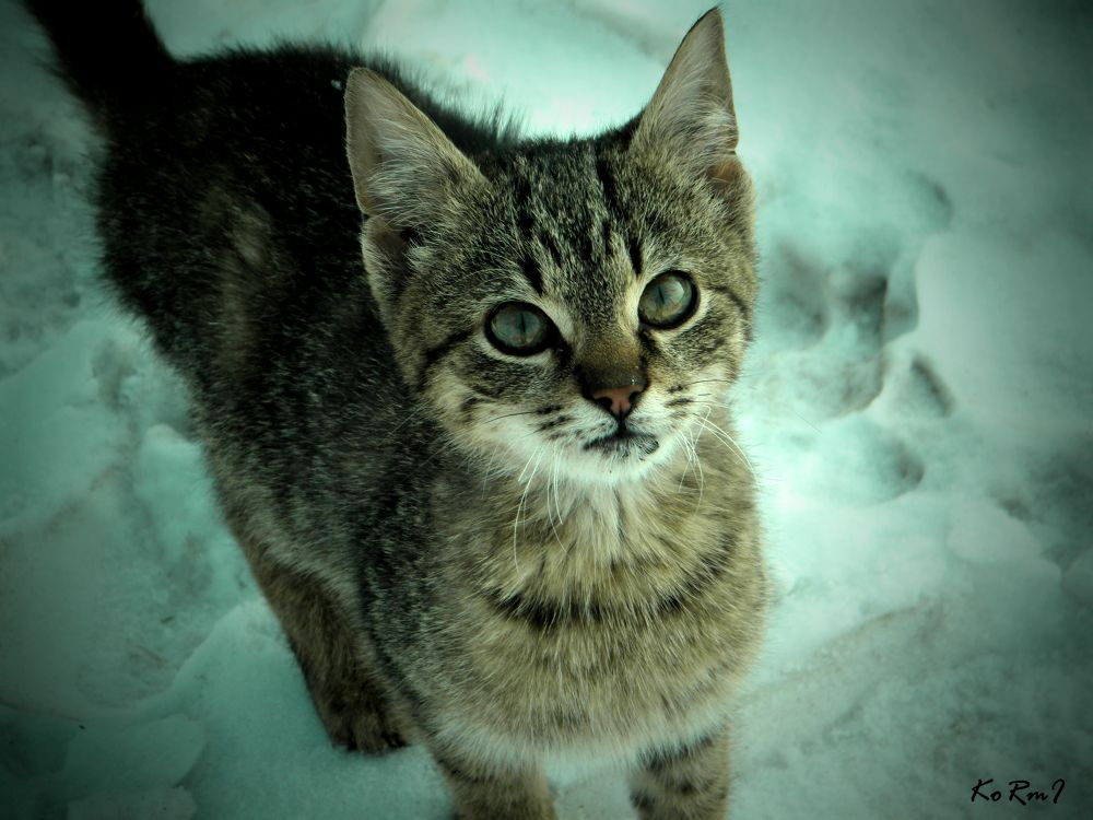 winter cat by Kormi