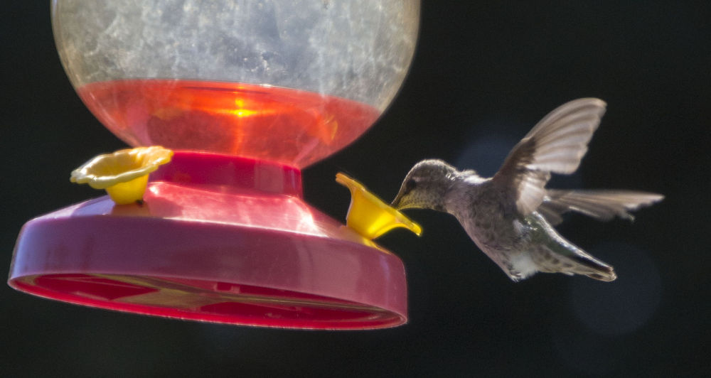 Bird by alberanek